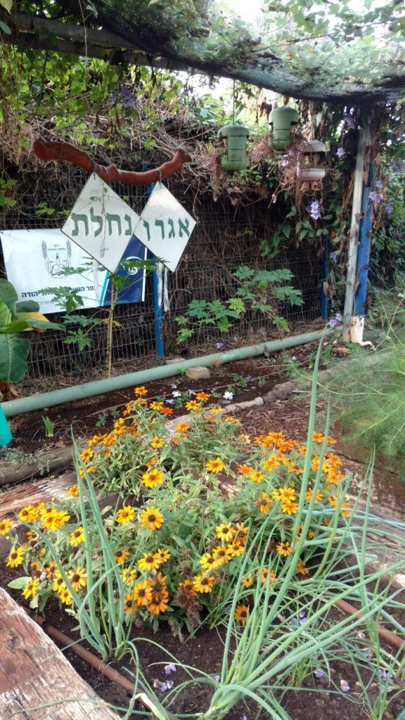 לימודי האגרו-אקולוגיה כוללים שילוב בין החקלאות לאסתטיקה עירונית.